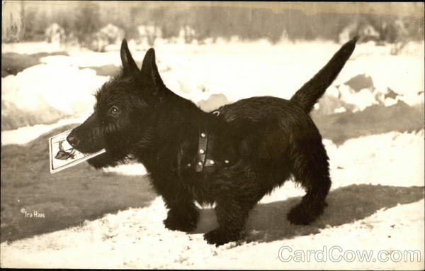 Black Scottish Terrier Dog in the Snow Ira Haas Scottish Terriers