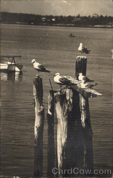 Seagulls Perched on the Dock Birds