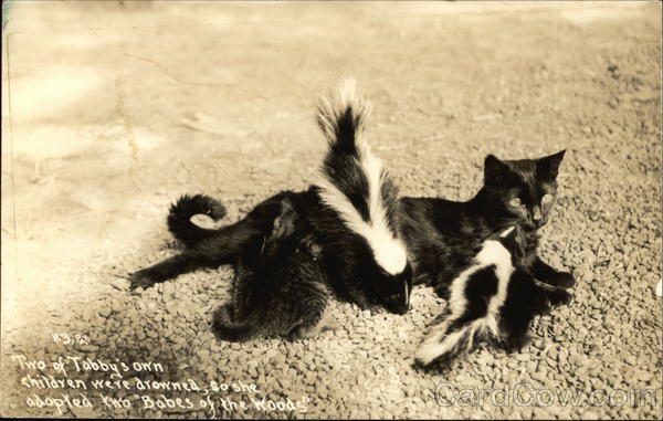 Cat With Two Adopted Baby Skunks Multiple Animals
