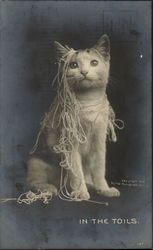 """In the Toils"" - Cat Draped in Yarn"