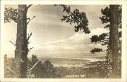 View of Monterey Bay Through the Endangered Monterey Pines
