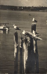 Seagulls Perched on the Dock