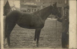 Man Hold Horse By The Halter
