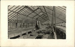 Man in Greenhouse 1907