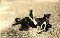 Cat With Two Adopted Baby Skunks