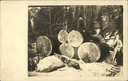Large Diameter Logs, Graham Creek