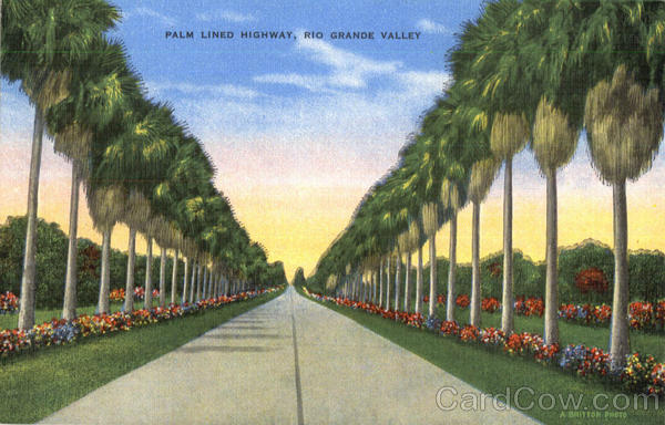 Palm Lined Highway Rio Grande Valley Texas