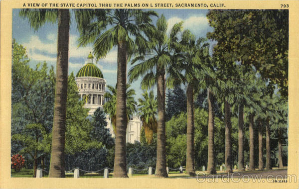 A View Of The State Capitol Thru The Palm On L Street Sacramento California