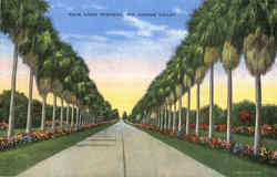 Palm Lined Highway Postcard