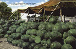 Watermelons Grow Big And Sweet, Frio County Postcard