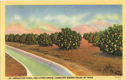 Irrigation Canal And Citrus Grove Postcard