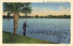 Feeding Ducks On A Lake In Florida