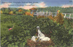 Anbinga Trail , Everglades National Park