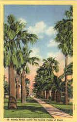Stately Palms