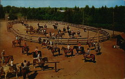 Action in the Corral at the Bar-B Ranch