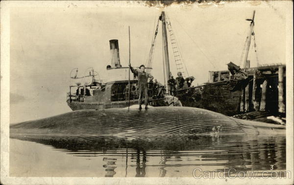 Whaler With Caught Whale Boats, Ships