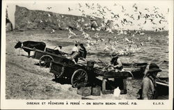 Seabirds and Fishermen , South Beach Postcard