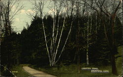 Looking Along Country Road Postcard