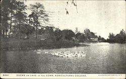 Connecticut Agricultural College - Ducks on Lake
