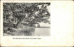 The Old Oak on the Island