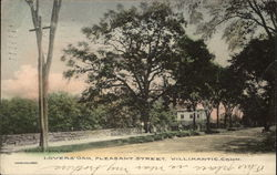 Lovers' Oak, Pleasant Street