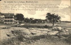 The Umbrella Tree and Cottages Postcard