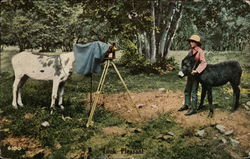 Horse taking photograph of Man with Donkey Postcard