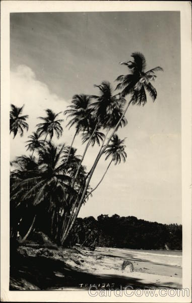 Palm Trees and Beach Trinidad Caribbean Islands