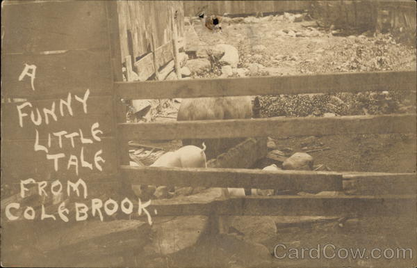 A Funny Tale from Colebrook Pigs
