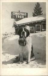 Dog in front of Structure with Christmas Tree Sign