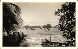 Lotchfield Ranch Scene