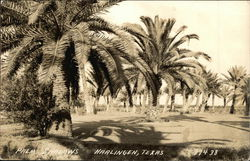 Palm Tree Grove and Shadows