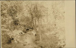 Outdoor Scene with Creek or River