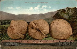 A Carload of Walnuts