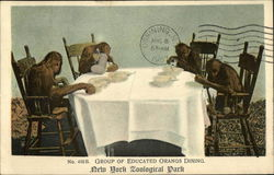 Group of Educated Orangs Dining