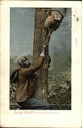 Man Climbing After an Opposum in a Tree