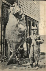 Huge Halibut Caught At Provincetown, Mass.