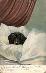 Miniature Dachshund Laying in Bed