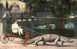 Girl on Cart Being Pulled by Alligator