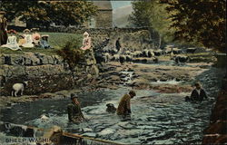 Sheep Washing in the River