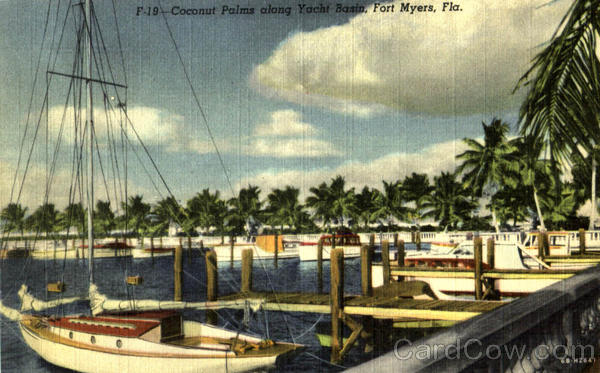 Coconut Palm Along Yacht Basin Fort Myers Florida