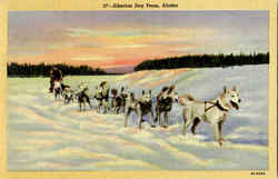 Siberian Dog Team Postcard