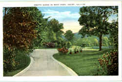 Pretty Scene In West Park Postcard