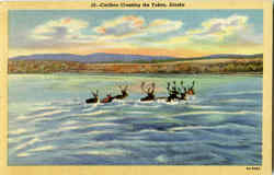 Caribou Crossing The Yukon