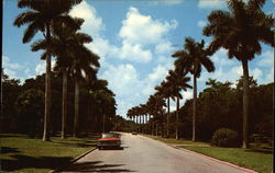 A Beautiful Boulevard Lined With Royal Palms