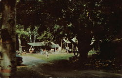 Camping at Selkirk Shores State Park Postcard