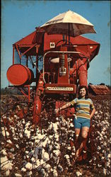Maid of Cotton