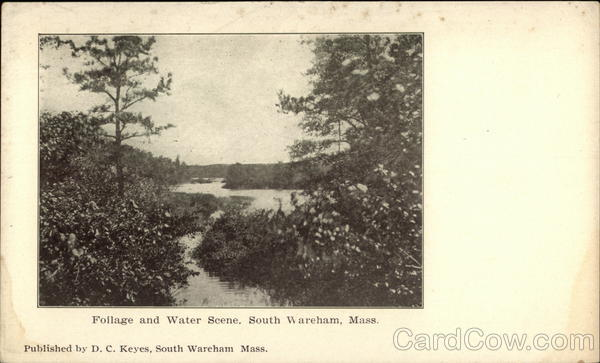 Foilage and Water Scene South Wareham Massachusetts