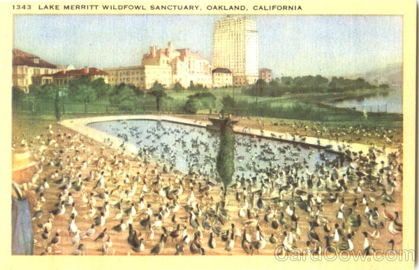 Lake Merritt Wildfowl Sanctuary Oakland California