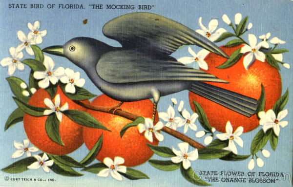 State Bird Of Florida The Mocking Bird Scenic